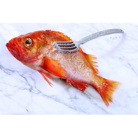 Ecailleur à poisson